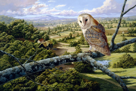 Wooden Jigsaw Puzzle - Barn Owl - 500 Pieces Wentworth