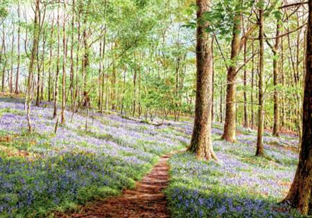 Wooden Jigsaw Puzzle - Bluebells, Brathay Woods (#631205) - 250 Pieces Wentworth