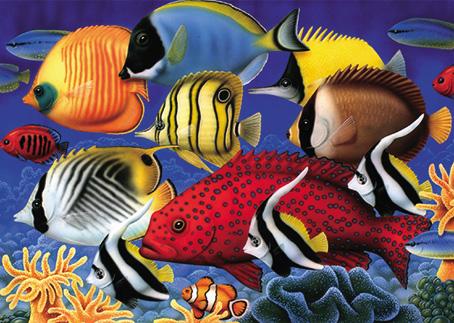 Crossword Clue Brightly Coloured Aquarium Fish