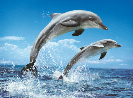 Jigsaw Puzzle - Two Jumping Dolphins (#39205) - 1000 Pieces Clementoni