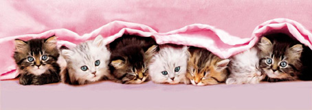 Jigsaw Puzzle - Kittens-Blanket (Panoramic Image) - 1000 Pieces  Clementoni