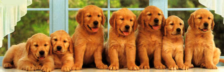 Jigsaw Puzzle - Puppies in a Row (Panoramic Image) - 1000 Pieces