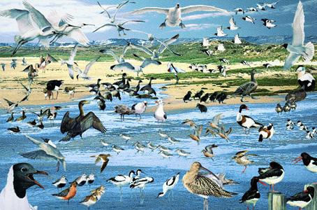 Jigsaw Puzzle - Seabirds - 1500 Pieces Jumbo