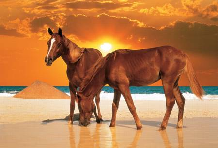 Jigsaw Puzzle - Stallions on the Beach (26093)