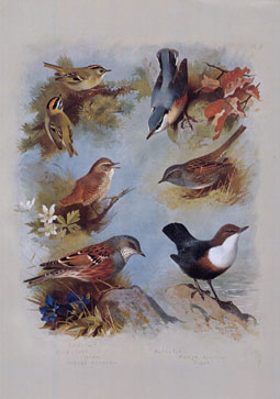 Wooden Jigsaw Puzzle - Wrens and Sparrows - 500 Pieces