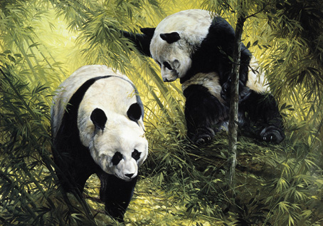 Wooden Jigsaw Puzzle Panda Pair 250 Pieces Wentworth